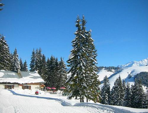 Skis aux pieds sur le domaine alpin